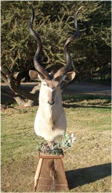 Kudu - Sided Mount